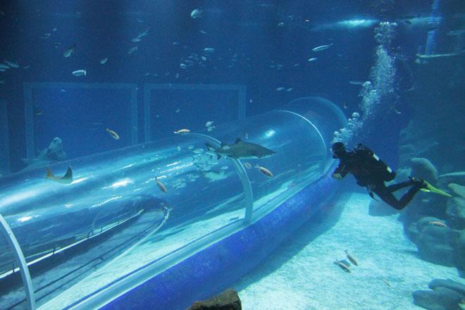 O túnel passa pelo Grande Tanque Oceânico (Foto: Bruno Bartholini)