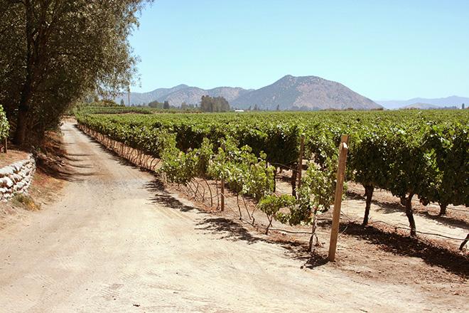 Vinícola localizada no Valle del Maipo