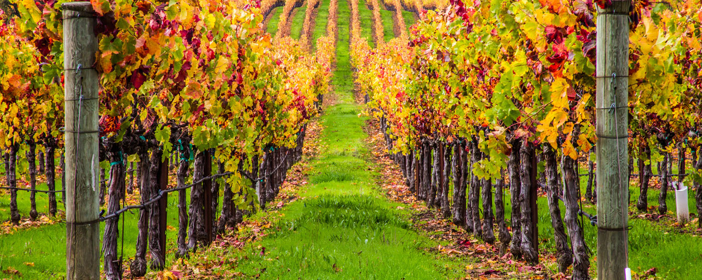 Top 5 Wineries You Must Visit In The Hunter Valley This Autumn