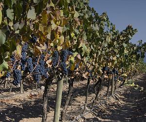 Vinícolas em Santiago para degustar vinhos chilenos