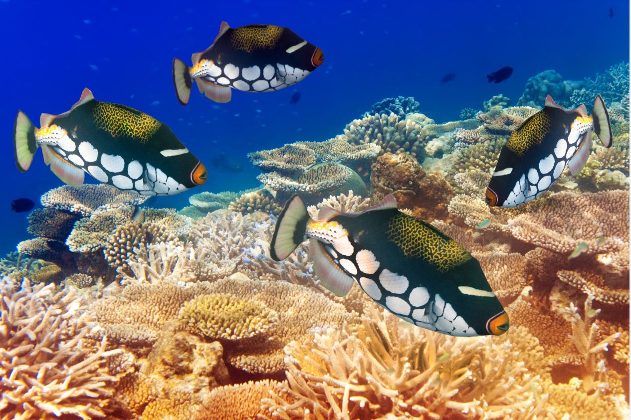 pesci barriera corallina mauritius