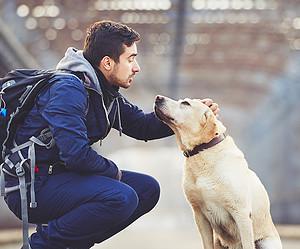 Voyager avec son animal : les infos à connaître