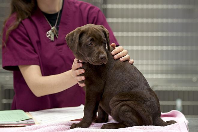 Vous consultez un vétérinaire pour gérer le stress et autres petits ennuis