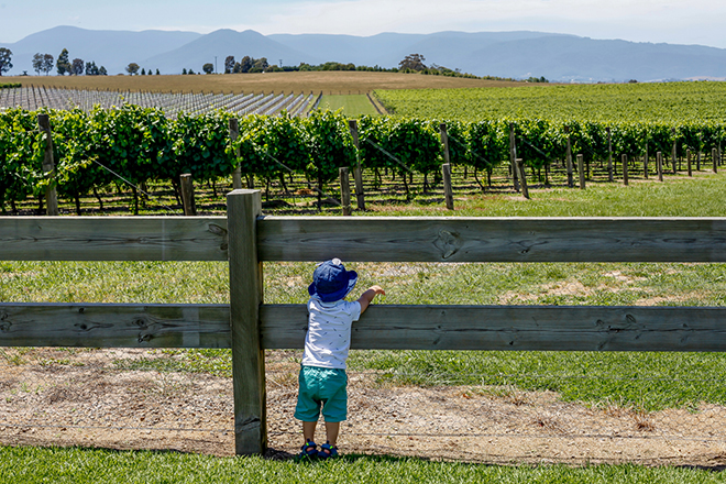 Kid playing in a Yarra Valley vineyard