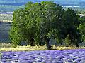 Hotel Aix en Provence - Bouches du Rhône